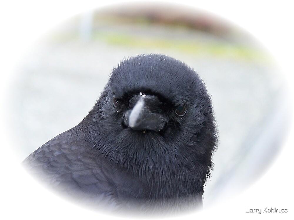 Portrait of a Crow by Larry Kohlruss