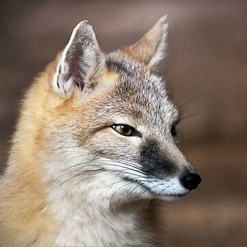 Swift Fox by venny
