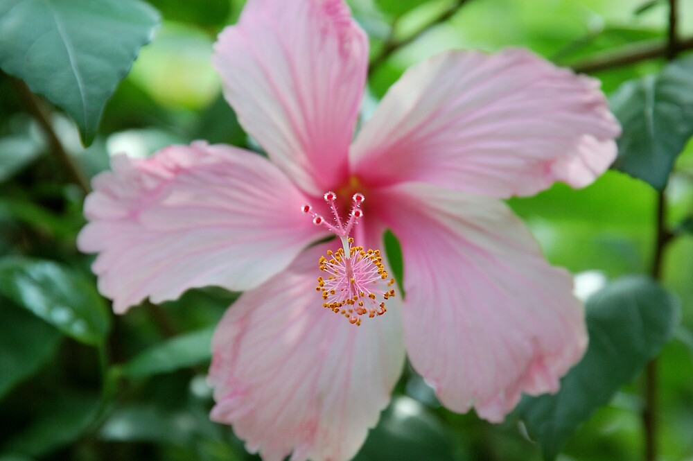 Jamaican Flower by tgmurphy