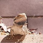 'ERR! SORRY NOT IN THE HOUSE!' Bearded dragon getting pushy. South Australia. by Rita Blom