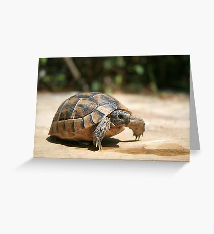 Portrait of a Young Wild Tortoise Greeting Card