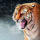 Winter Tiger by Daniel Ranger
