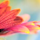 The Colors of Summer by Paula Grant