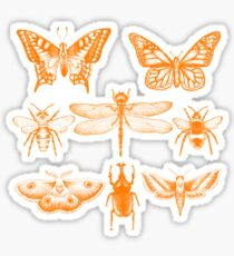 Yellow Insect Series Sticker