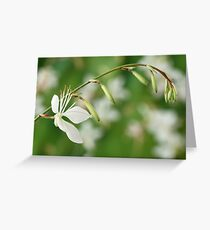 Gaura lindheimeri 'Sparkle White' Greeting Card