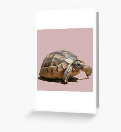 Portrait of a Young Wild Tortoise Isolated Greeting Card