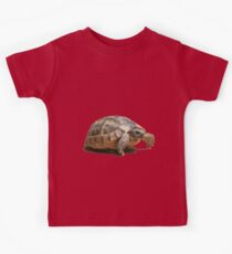 Portrait of a Young Wild Tortoise Isolated Kids Clothes