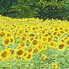 A Field of Sun  by RebeccaWeston
