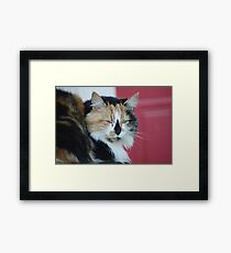 Cat and Red Door Framed Print