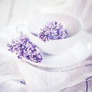 Dream of Lilacs by AugenBlicke