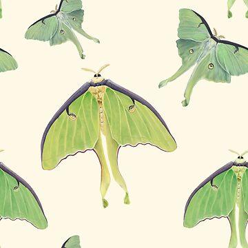 Luna Moths  by amandamakepeace
