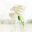 Weiße Butterblume von AugenBlicke