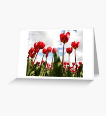 Tulip Fever Greeting Card