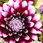 Hannah's Flower #1 by pcknockoutart