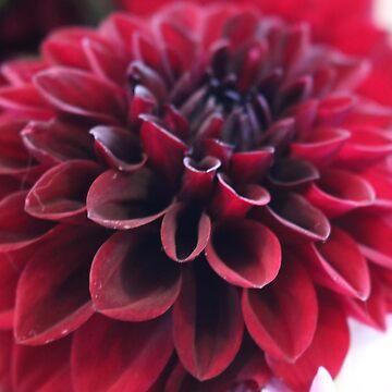 Hannah's Flower #2 by pcknockoutart
