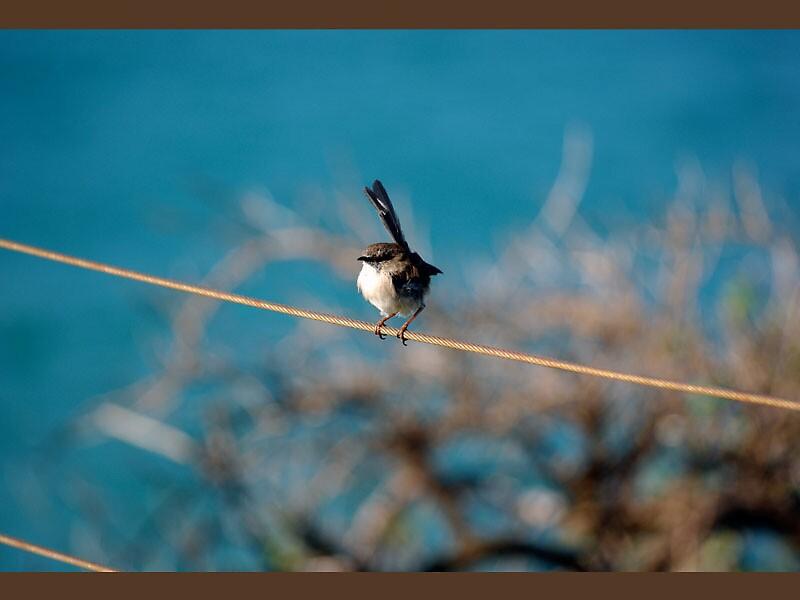 Bird on a wire by Missy777
