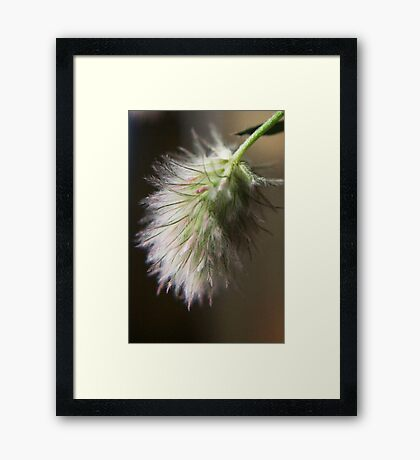 I love this smell  (from wild flowers collection) Framed Print