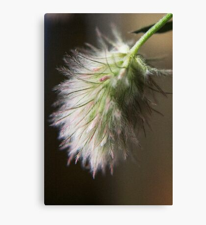 I love this smell  (from wild flowers collection) Canvas Print