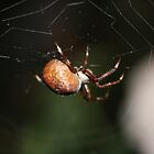 Golden Orb Spider by TeAnne