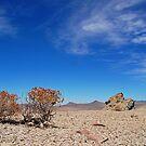 Nevada Desert by Jared Manninen