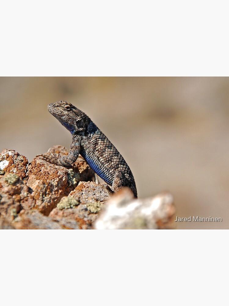 Nevada Lizard by JaredManninen