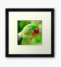 Alexandrine Parrot Framed Print