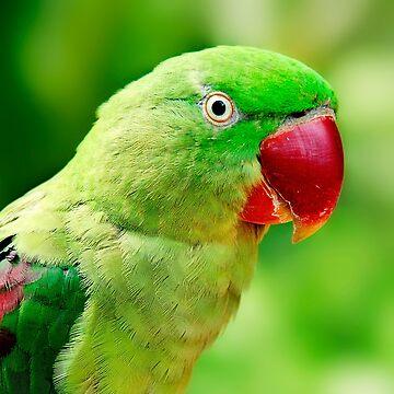 Alexandrine Parrot by GreenEyedHarpy