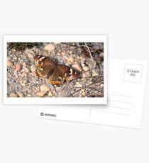 Common Buckeye on the Rocks Postcards