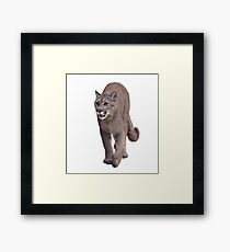 Florida panther or cougar digital painting on white background Framed Print