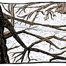 Tree Branches by Jared Manninen