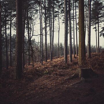 Delamere Forest, Cheshire by Undersound