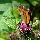 Butterfly on flower (2) by ReaDarcy