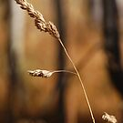 Dying Grasses by Jared Manninen