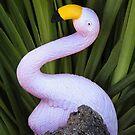 Funny Flamingo by Heather Friedman