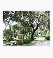 Savannah Photographic Print