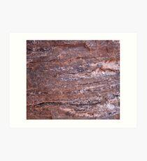 Petrified Wood 1 Art Print