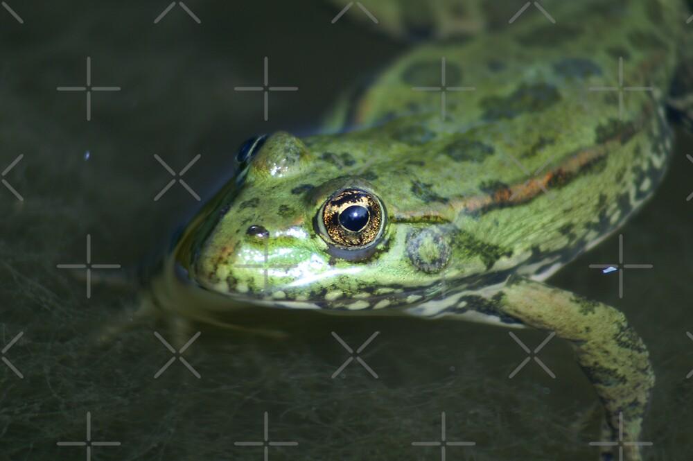 golden eye by poupoune