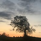 Tree Silhouette at Sunset. by Billlee