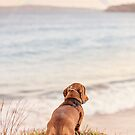 Dachshund Dog Looking at Rainbow Over the Beach by BreezePics