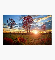 Red Maples Photographic Print