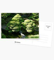 SF Japanese Tea Garden Study 6  Postcards