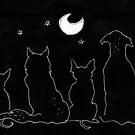 moondogs by Matt Mawson