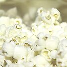 White Popcorn by TeAnne