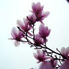 Sweet Magnolia by Karen Stahlros