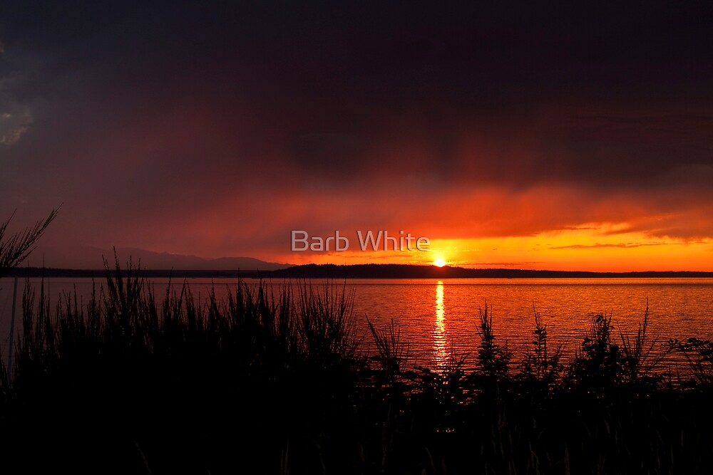 Before the Storm by Barb White