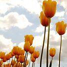 Tulip Friends by Tamela J Wolff