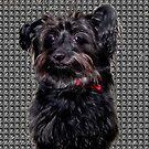 Its Me Poochie by Linda Miller Gesualdo