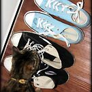 Cat, Curiosity, & Converse by Jenni Atkins-Stair