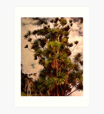 Cabbage Tree - Urquharts Bay. Art Print