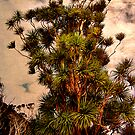 Cabbage Tree - Urquharts Bay. by Lynne Haselden